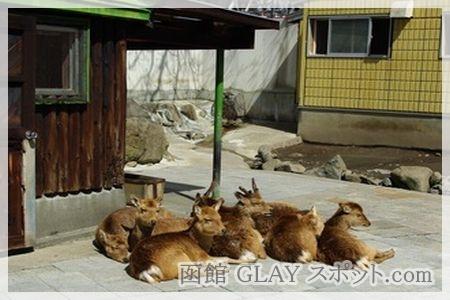 函館公園 シカ 鹿 YUKI 磯谷有希 ゆかりの地 スポット 写真 画像 JAM ジュディアンドマリー ジュディマリ