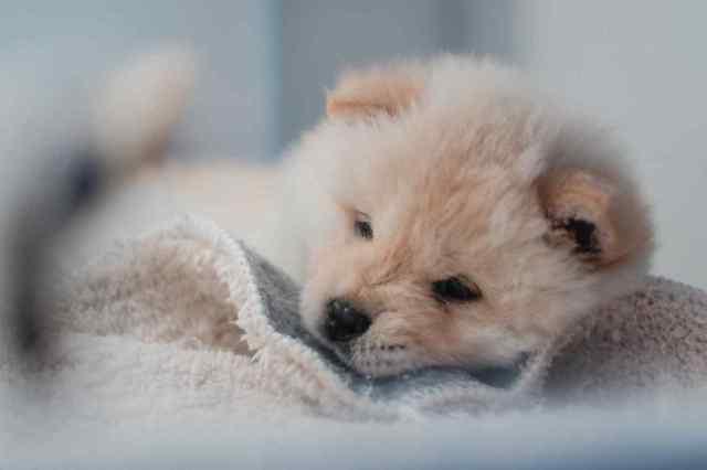 Одессит устроил погром в ветеринарной клинике, где не оказали помощь его щенку: за это он заплатит 50 тыс. грн