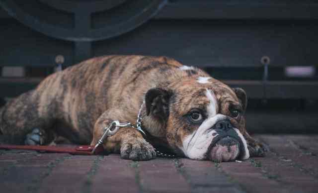 У пенсионерки из Измаила, чья собака дважды покусала людей, отберут животное