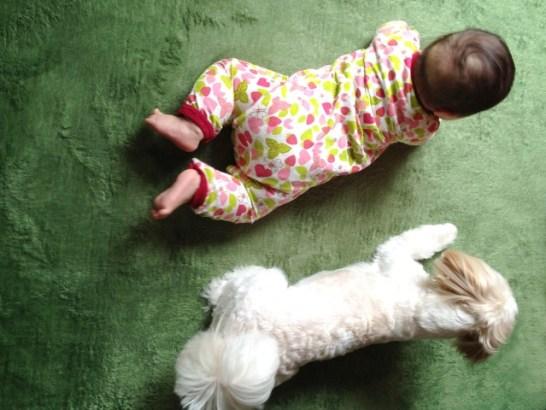 犬と赤ちゃんいつから一緒にあそばせる?