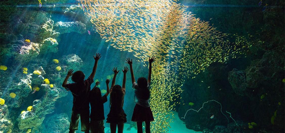 【360°】アクアマリンふくしま 三角トンネルが潮目を表す大水槽 360°パノラマで体感!