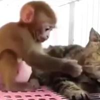 猫さんのヒゲが気になる子猿ちゃんですが……ちょっと痛いです(>w< )