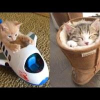 【動画集】海外の猫ちゃんたちのドタバタ劇  Part1