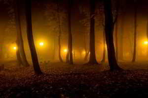 significado de Soñar con Bosques
