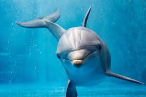significado-de-soñar-con-delfines