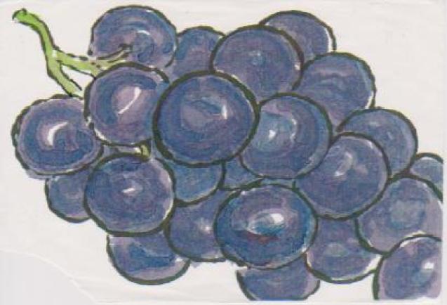 ブドウの絵ー3