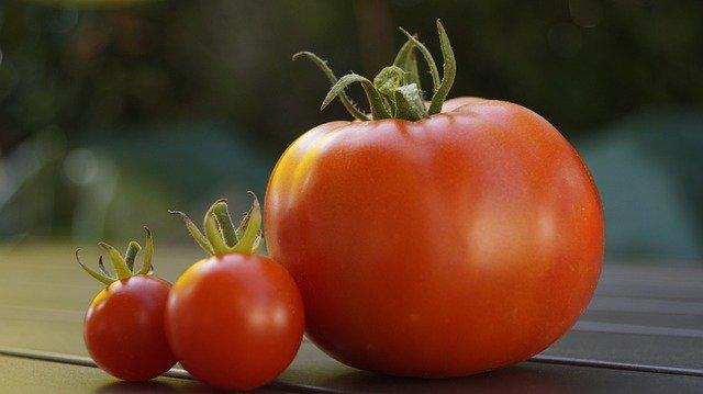 トマトの画像写真