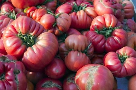 Beefsteak tomato03