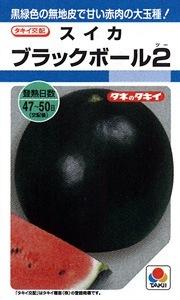 BlackBalll