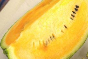 Summer orange (1)