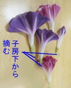 hanagaratumi