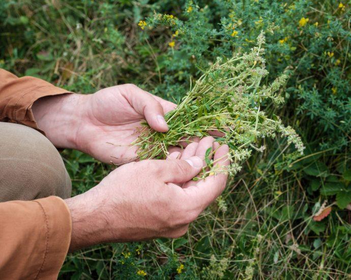 Heilpflanzen für Männer