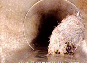 Ρίζες που έχουν εισχωρήσει σε σωλήνα στην Βάρκιζα