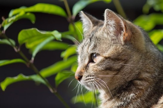 猫好き男特徴