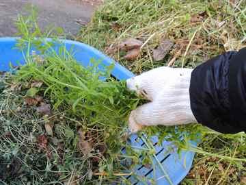 須恵町 一軒家 庭の草取り|えびす造園