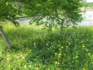 福岡市東区 一軒家 庭の草引き|えびす造園