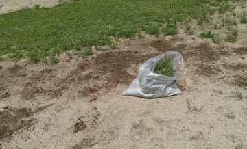福津市 一軒家 庭の草引き えびす造園