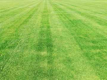 福岡市東区 一軒家 庭の芝の手入れ|えびす造園
