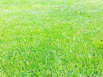 福岡市博多区 一軒家 庭の芝刈り|えびす造園