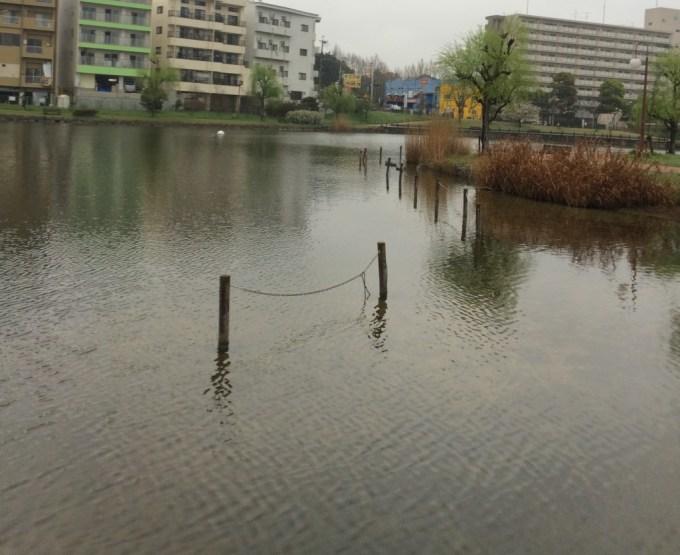 150401西の堤池1
