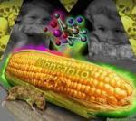中国、ロシア、欧州はNO!日本は遺伝子組み換え食品を大量輸入している現実