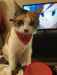 熊本地震による迷子犬・迷子猫情報