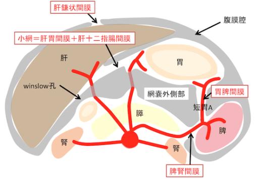peritoneal1 (1)