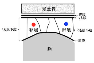 subarachnoidanatomy