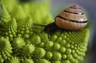 esta foto muestra como la espiral es una de la formas más habituales en la naturaleza.