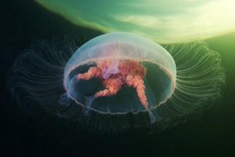 medusa fotografiada contra la luna llena