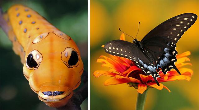 naturaleza-oruga-mariposa-mutante-0