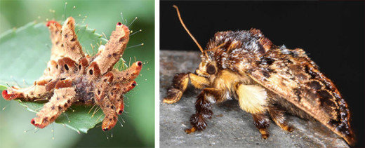 naturaleza-oruga-mariposa-mutante-6