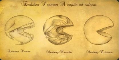 ilustracion-anatomia-pac-man-estilo-darwin