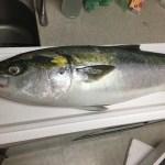 2016/10/26釣り魚買い取り 出張寿司 ネタ