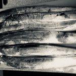 2018/07/06 釣り魚買取り タチウオ 2.1kg 相模湾 7/14土曜日寿司会