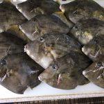 2018/10/19 釣り魚買取り カワハギ2.5kg 葉山沖相模湾 出張寿司