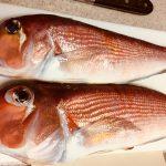 2018/11/12釣り魚買取りアマダイ 3尾で2kg相模湾 出張寿司