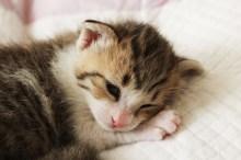 猫アレルギー 症状
