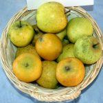 Pommier Reinette Ananas