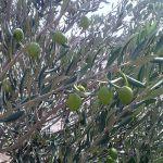 olivier negrette