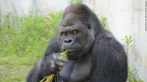 จันจิมาหน้าลิง