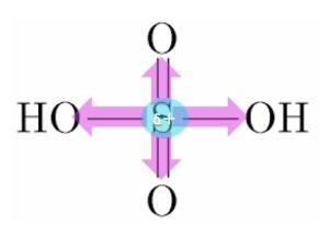 硫酸分子 分極