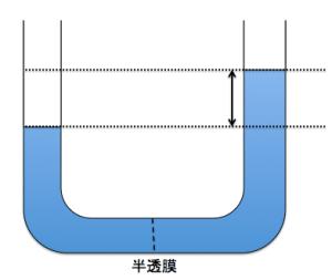 浸透圧高さ測定