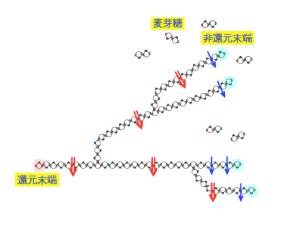 デンプン分解酵素、アミラーゼ
