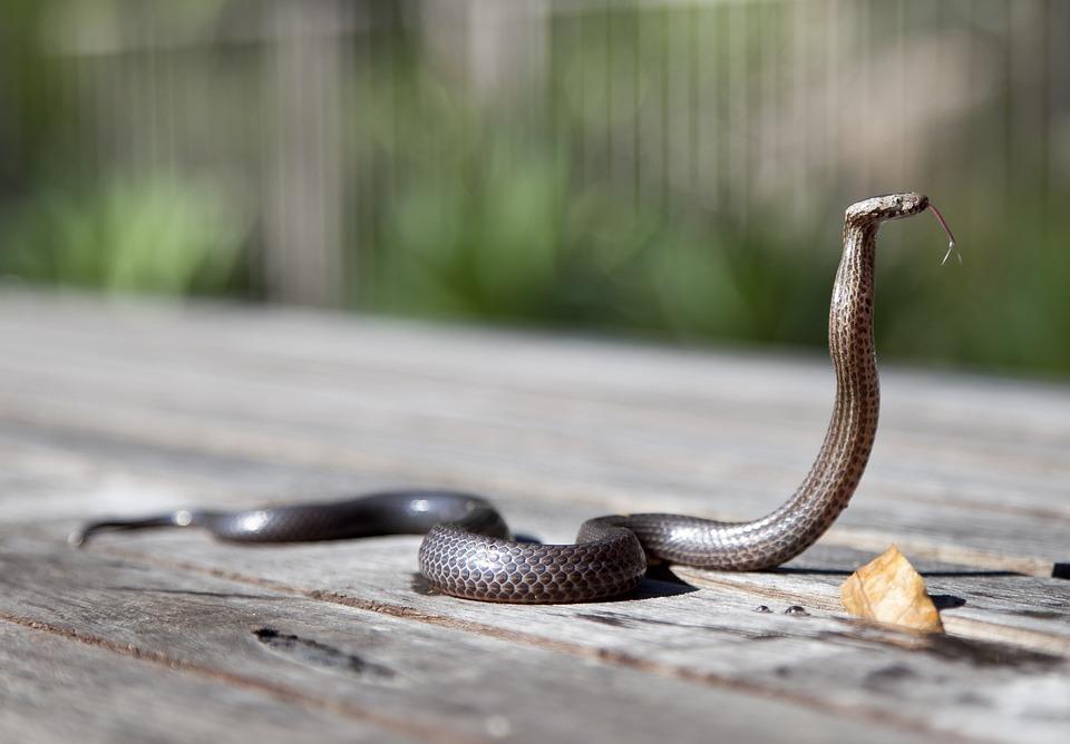初心者向けの飼いやすい爬虫類5選|飼育方法や餌は?