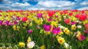 soñar con primavera
