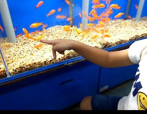 2019年1月次男「金魚」エアーポンプを交換する