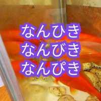 「ぴき」「ひき」「びき」【日本語難しい】