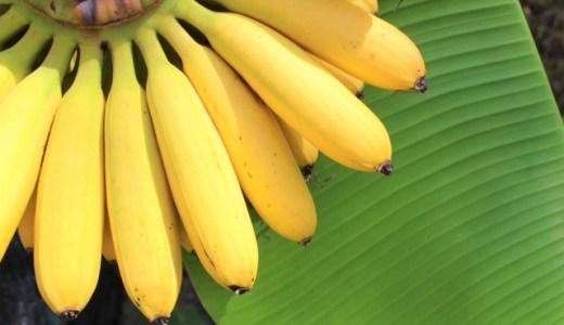 野田枝里のバナナジュースの全店の場所と営業時間!サイズと値段も調査!