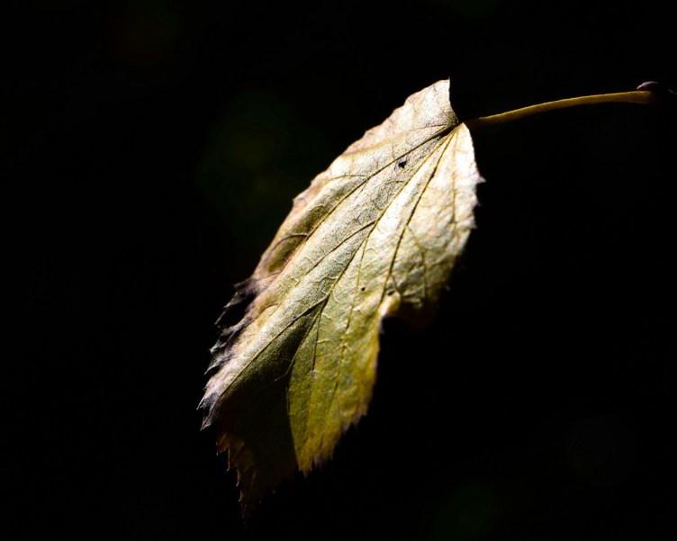 une feuille d'arbre éclairé dans le noir